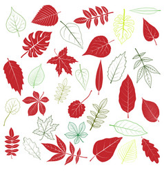set of tree leaves vector image