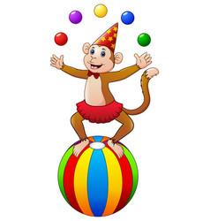Circus monkey while juggling balls vector