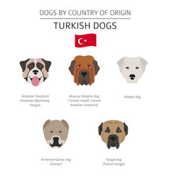 Dogs country origin turkish dog breeds vector