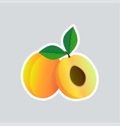 Fresh juicy apricot sticker tasty ripe fruit icon vector
