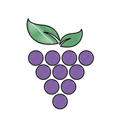 grape fruit fresh food image vector image