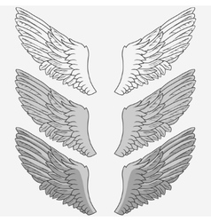 Wings of bird set vector image