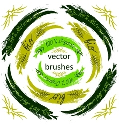 brush - Bio Organic Natural on background vector image