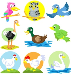 Cartoon Birds Poultry set vector image