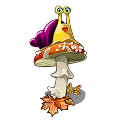 funny snail on a fly agaric isolated on white vector image