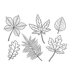hand drawn autumn leaves vector image
