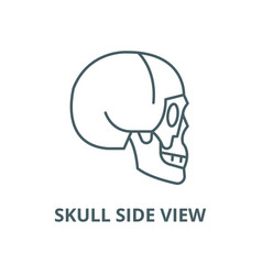 skull side view line icon linear concept vector image
