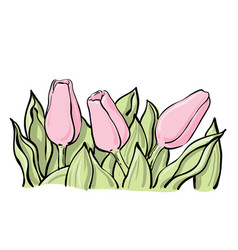Thee tulip flowers with leaves vector
