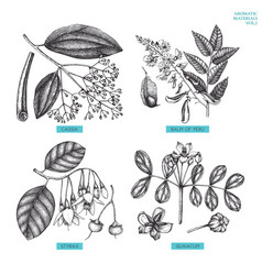 aromatic and medicinal plant set vector image
