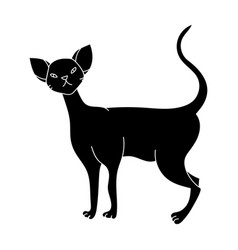 cornish rex icon in black style isolated on white vector image vector image