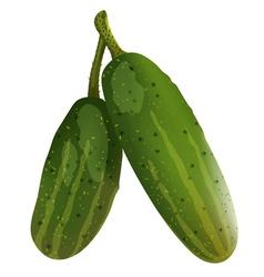 cucumbers vector image vector image