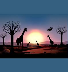 Background scene with silhouette giraffe in the vector