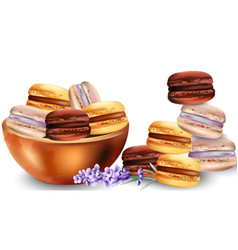French macaroon sweets in tray vector