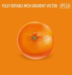 Ripe unpeeled orange on an orange background vector