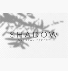 shadow overlay effect transparent soft light and vector image