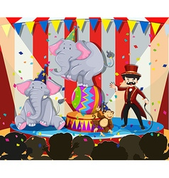Animal show at the circus vector image