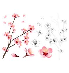 momo peach flower outline vector image vector image