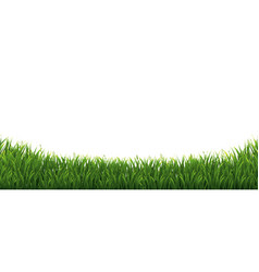 Green grass border in isolated white background vector