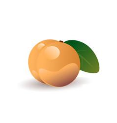 peach fruit vector image