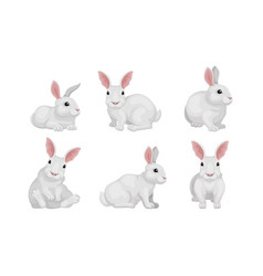 White fluffy rabbit in different poses set vector