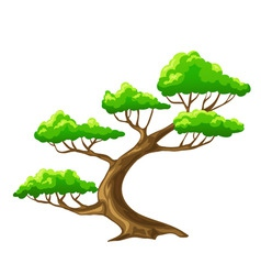 cartoon vector tree bansai with white background vector image vector image