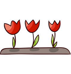 opened tulips isolated vector image