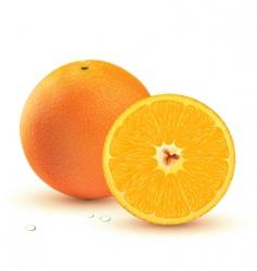 juicy orange vector image vector image