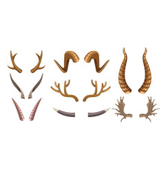 animal horns goat deer and moose poaching and vector image