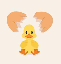 Broken egg shell with baby duck vector