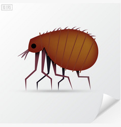 Cartoon brown insect flea in material style vector image