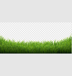 Green grass isolated transparent background vector
