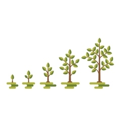 Green tree growth diagram vector image