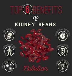 kidney beans benefits vector image