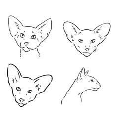 Oriental shorthair cat hand drawn style print vector