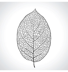 Black macro leaf natural isolated vector image vector image