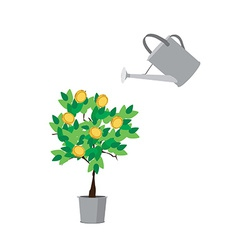 Watering money tree vector image vector image