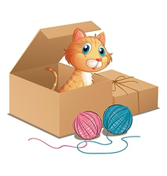 A cat inside the box vector
