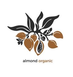 Almond branch natural nut oil milk vector