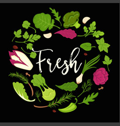 Lettuce salads fresh leafy vegetables vector