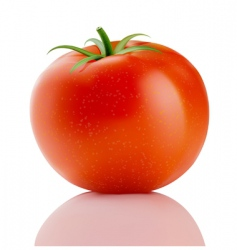 red truss tomato vector image