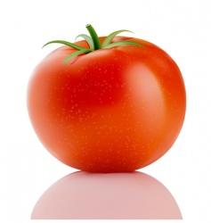 Red truss tomato vector