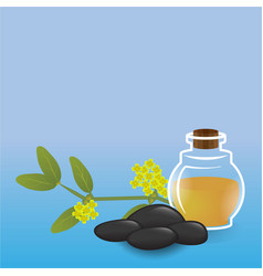 simmondsia chinensis jojoba oil glass bottle vector image