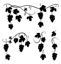 bunch of grapes - set of few decorative elements vector image vector image