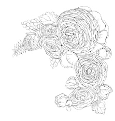 Greeting card with linear Ranunculus flowers vector image vector image