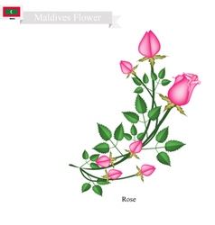 Rose Flowers The Popular Flower of Maldives vector image vector image