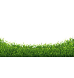 Green green grass isolated white background vector