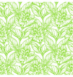 Seamless pattern with oregano vector