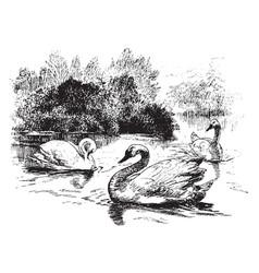 swans vintage vector image