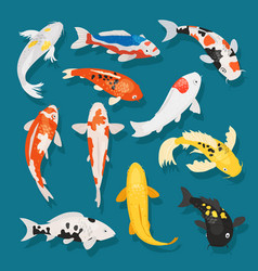 japanese fish carp and vector image