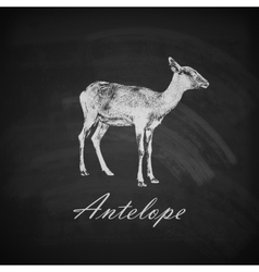 A chalk antelope on the blackboard texture vector